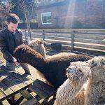 Dlogic zet in het zonnetje; Epic Alpaca farm